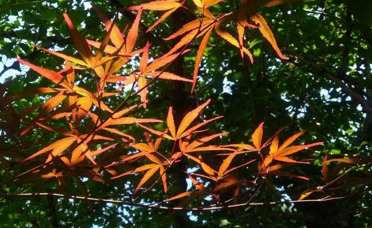 tree with orange leaves